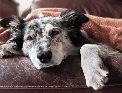 Animal Cruelty Laws